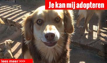 hond-2