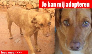 hond-4