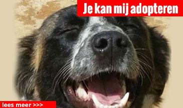 hond-5