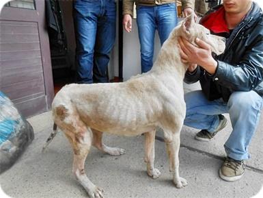 help dieren in nood dierennood image-2