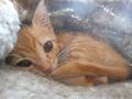 Klein project 22 | Zwerfkatten in Griekenland hebben hulp nodig