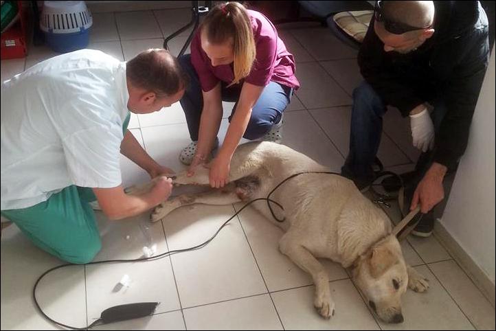 hulpactie 89 stichting dierennood gewonde hond