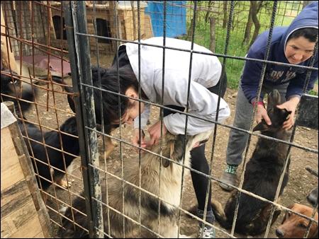 hulpactie 89 stichting dierennood