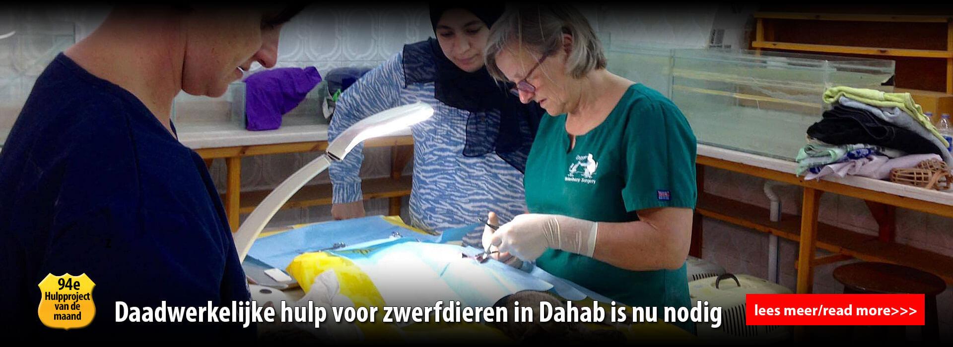 diashiow dia 2 - operatie