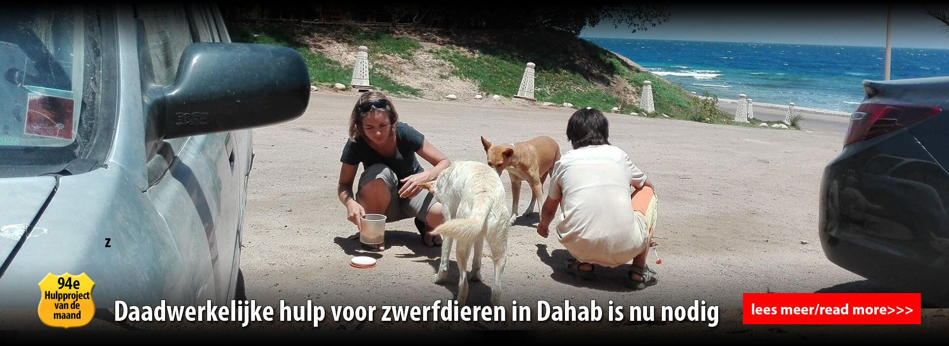 diashow dia 3 - honden voeren op straat