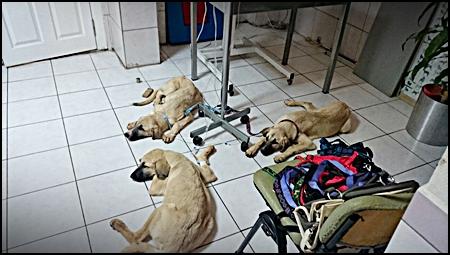 Honden geholpen in Turkijë