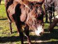 Klein Project 30 – Marleen Verhoef helpt in Spanje sterk verwaarloosde ezels.