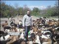 Hulpactie 97 – Help Sasha 800 honden te voeren