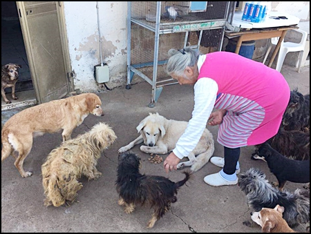 Teresa met honden