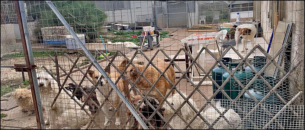 Binnenplaats met honden
