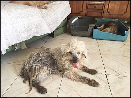 Ongewassen hond