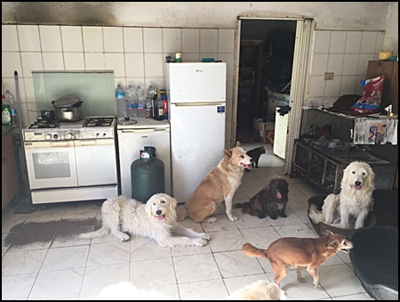 Honden in keuken