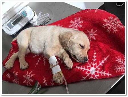 Deze pup kon nog gered worden