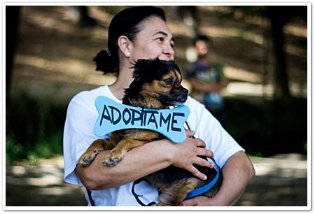 Silvia doet er alles aan om opgevangen dieren te laten adopteren