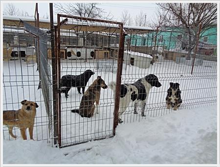 300 honden die iedere dag verzorgd moeten worden