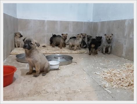 Een aantal van de vele pups die worden gevonden op straat