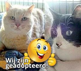 Coco en Mina adoptie katten