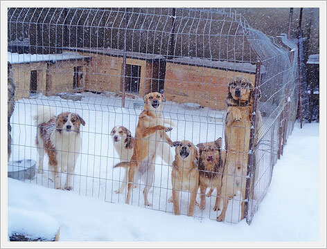Het is in Moldavië vaak ijs en ijskoud...