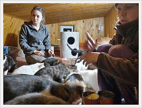 Een vrijwilliger had nog een plekje op zolder over voor de meest kwetsbare katten van het asiel.