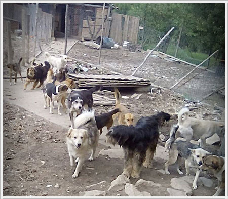 De dieren bij Krasi hebben geen luxe maar zijn er wel veilig en krijgen liefde.