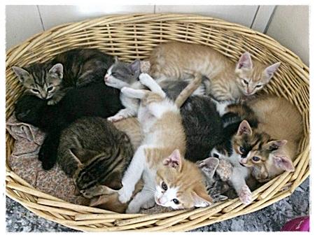 Een constante stroom van nieuwe kittens.....