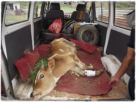 Oud busje ingericht als dierenambulance