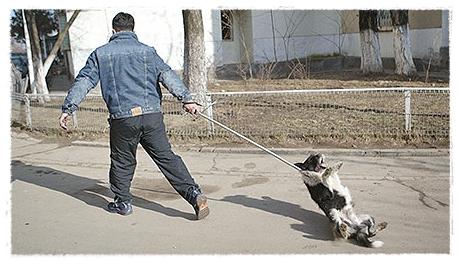 Hondenvanger sleept hond over straat