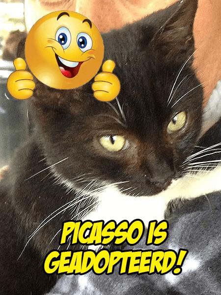 Foto Picasso