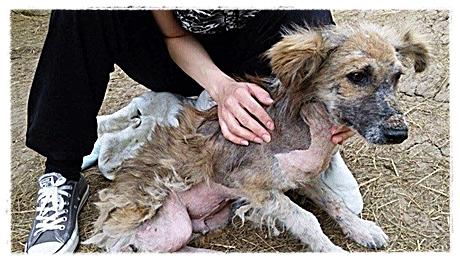 Iedere hond voelt bij aida meteen haar grote liefde voor dieren.