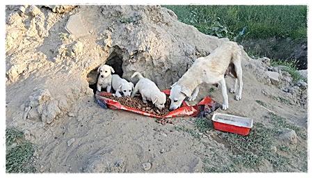 Hond met pupjes