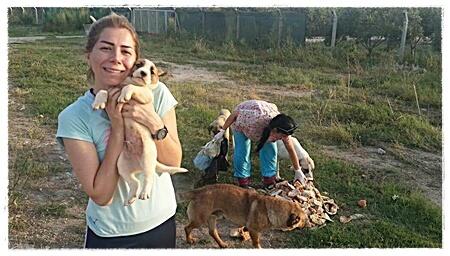 Veel dieren zijn door families pardoes op straat gezet