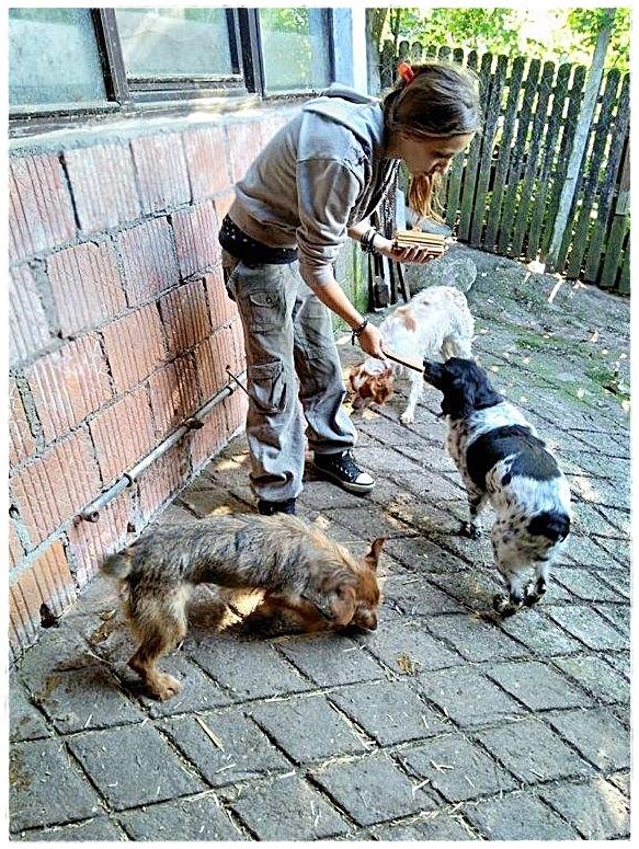 KP37-Marina laat de dieren weer bijkomen na de overstroming