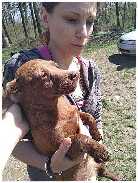 KP37-stuk voor stuk werden de honden naar een veilige plek gebracht