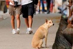 Hond in vakantieoord