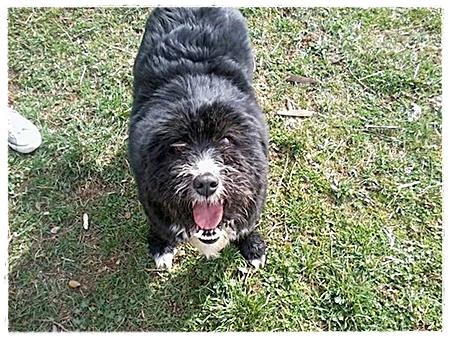 Dezelfde Tina werd na behandeling juist de meest harige hond van het asiel