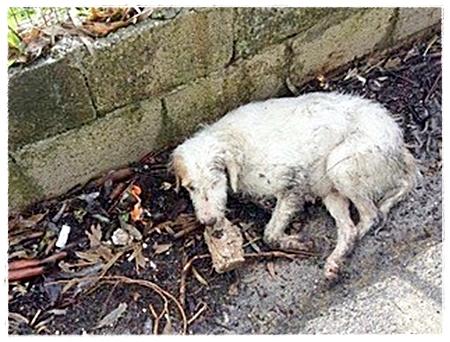 Aangereden hond die dagenlang langs de weg lag en niemand stopte