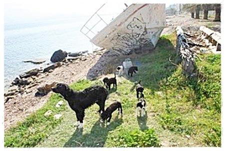 Moeder met pups op verlaten strandje