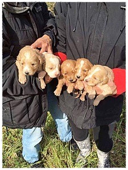 weer een nestje achtergelaten pups gevonden