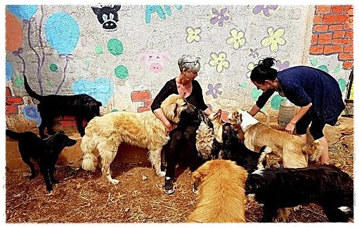 Met veel liefde verzorgen zij de opgevangen honden