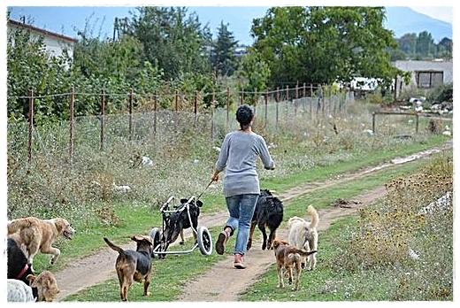Vildina met een deel van haar honden