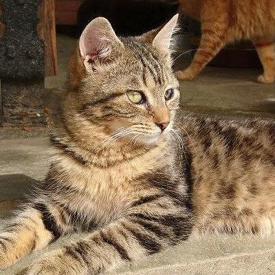 Filo cat
