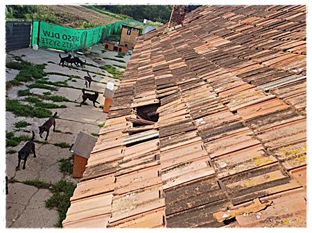 Dit dak moet vernieuwd worden met op de achtergrond de door jullie gedoneerde omheining