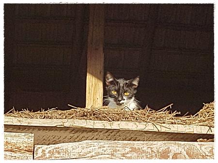Ook veel mishandelde katten wonen nu veilig bij Ramona
