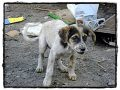 Hulpactie 108 – Extreem zwaar voor dieren in Venezuela