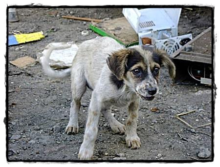 Wat voor toekomst heeft een jonge hond nog in Venezuela.