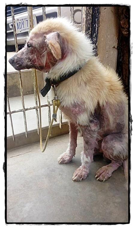 Zo komt Rosi achtergelaten honden tegen zonder voer of water
