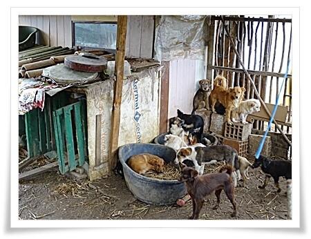 Honden in tuin