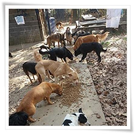 Honden eten hondevoer