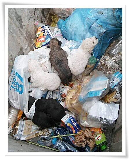 weggegooide pups in vuilcontainer