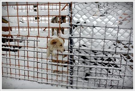 bitter koud nu maar ze kunnen niet allemaal binnen liggen